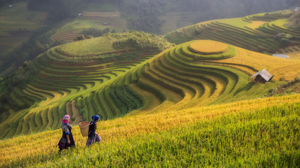 Foto auf Acrylglas Reisfelder Terraced rice field inside fog and morning ray in Mu Cang Chai,