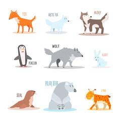Arctic and Antarctic Animals, Penguin. Vector Illustration