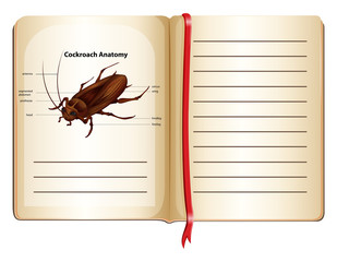 Cockroach anatomy on a book