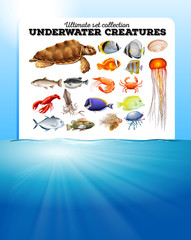Sea animals and the ocean
