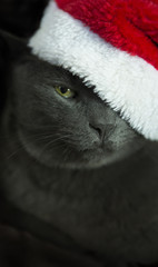 Christmas Cat - Gray Cat Santa, Christmas Pet with Santa Claus H