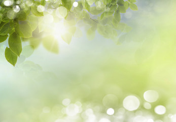 Spring background with leaves. background bokeh