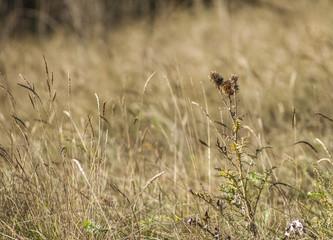 Autumn wild flowers in the field 3