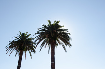 two palm trees in front of a clear blue sky with sun shinning through the leaves on a beautiful day