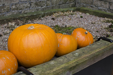 Pumpkins outside for halloween