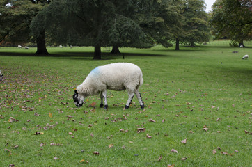 Sheep in hills and valleys derbyshire churches and bridges country hall