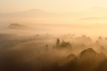 Foggy morning in a Czech republic. Golden rays on are shining at the forest. Nature background early morning