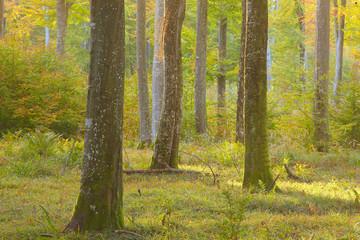 Garden Poster Forest Herbst