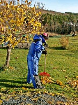 Senior raking leaves in his garden