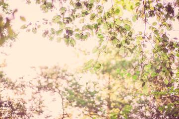 Sfondo di alberi e foglie a colori con boken