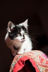 Gatto bianco e nero in agguato su coperta rossa
