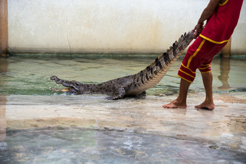Crocodile show in thailand