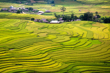 Garden Poster Rice fields Beautiful rice terrace in northern vietnam