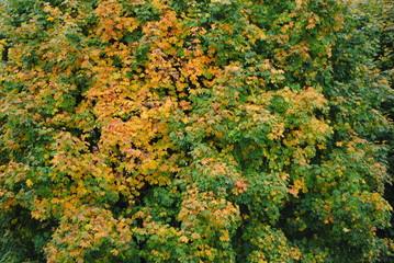 Laubbaum,Herbst