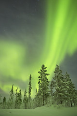 Fototapete - Aurora borealis over snowy trees in winter, Finnish Lapland