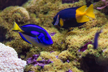 Bright fish with coral reefs