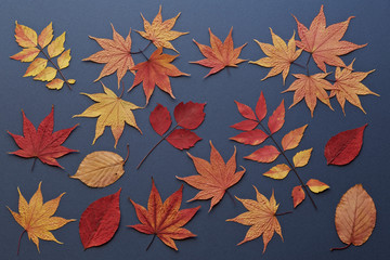 Autumn leaves on navy blue background