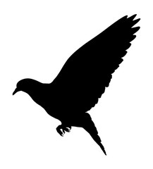Silhouette of a flying dove on a white background, vector illustration