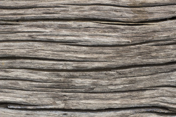 the Bark surface, background and texture - close up - aged Wood