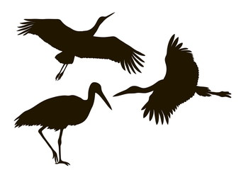 drawing silhouettes of three storks
