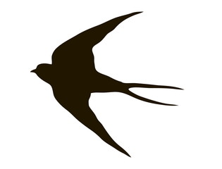 drawing silhouette flying swallows