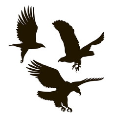 drawing silhouettes of three eagles