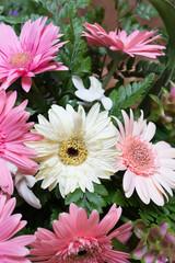flower wedding decoration, beautiful gerbera flower blooming