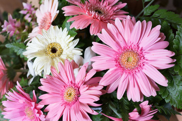 flower wedding decoration, beautiful gerbera flower blooming