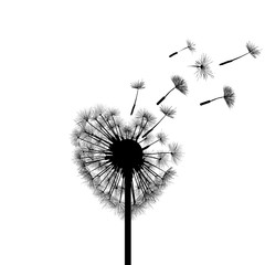 Silhouette dandelion