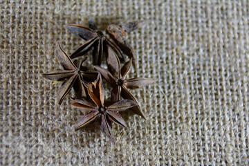 badian stars on the sackcloth