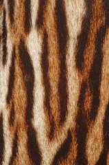 pelliccia di tigre