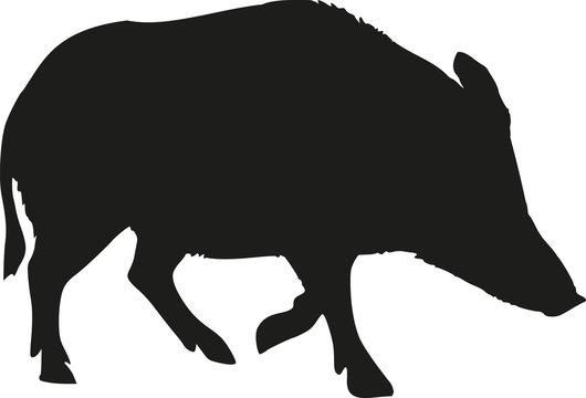 Wild pig silhouette