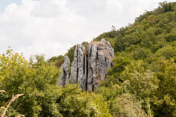Fotobehang Zalm Felsen im Wald