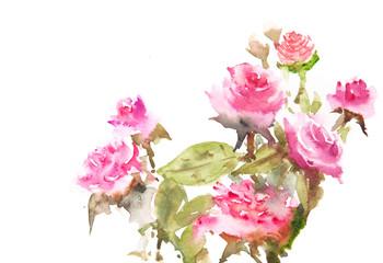 Beautiful roses, watercolor illustrator