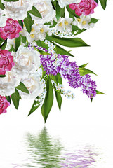 spring flowers lilac  isolated on white background