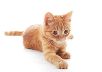 Wall Mural - Cute ginger kitten