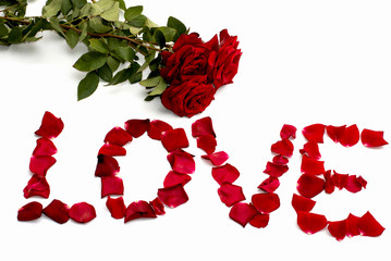 inscription love from petals of roses, and one rose, isolate,
