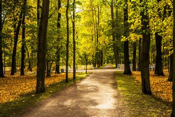 Keuken foto achterwand Weg in bos Paths and benches in catherine park in autumn
