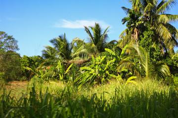 Dschungel, Sri Lanka