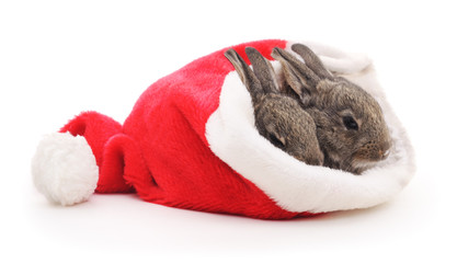 Rabbits in a Santa hat.