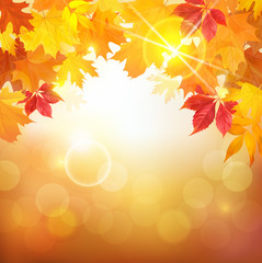 Sunny autumn background with colored leaves. Vector illustration.
