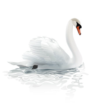 Swan.