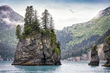 Foggy Day, Kenai Fjords National Park, Alaska, USA