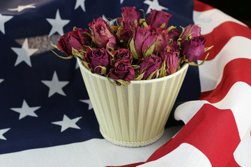 US flag rose flower