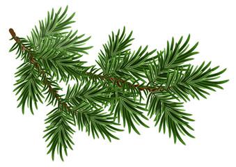 Fur-tree branch. Green fluffy pine branch