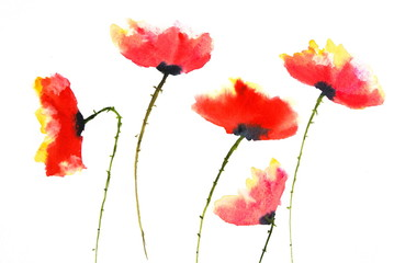 Beautiful red poppy flowers, watercolor painting