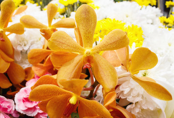 Beautiful yellow orchid flowers closeup