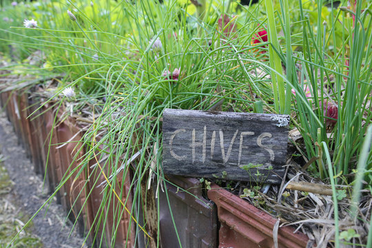 Rustic Herb markers , Chives