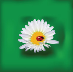 Background with a Daisy