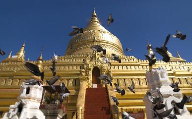 Flying doves in front of golden temple in Bagan, Myanmar